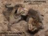 042216-kittens