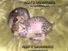 042416-kittens-2