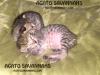 042416-kittens