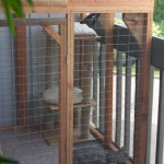 Zuri and Taj in their Catio